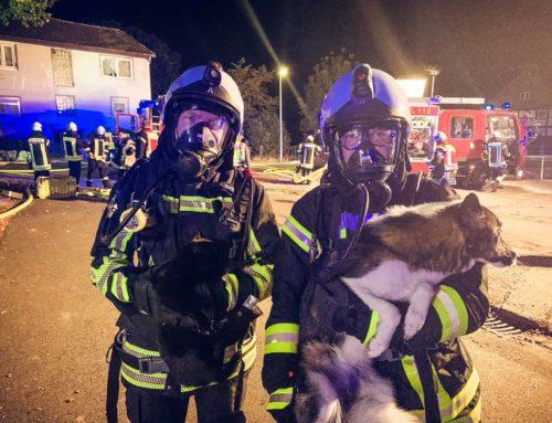 Kellerbrand in Hohnstedt: Feuerwehr rettet Familie und Haustiere
